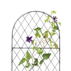 Designed and hand-crafted especially for terrain, this tall, narrow trellis welcomes all varieties of climbing flowers and veggies. Metal Garden Trellis, Climbing Flowers, British Garden, Summer Plants, Trellis Design, British Wildlife, Clematis, Habitats, Planting