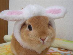 via Peachgirl ♡ http://momochiime.tumblr.com Doblemente conejo!