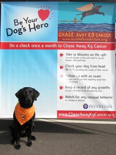 do a check once a month to chase away K9 cancer