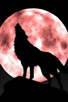 SONG of The WOLF ,,,,calling  to his love of the Moon..