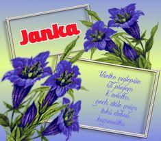 21.8 Janka Glass Vase, Plants, Home Decor, Decoration Home, Room Decor, Plant, Home Interior Design, Planets, Home Decoration