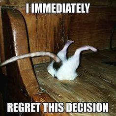 150 Ratties Ideas Pet Rats Cute Rats Rats