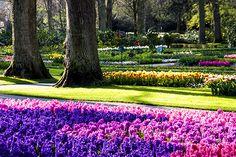 Keukenhof: Como visitar o parque das flores na Holanda