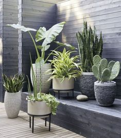 New Backyard Patio Landscaping Plants Decks Ideas Rock Planters, Cement Planters, Flower Planters, Wall Planters, Succulent Planters, Hanging Planters, Small Succulents, Succulents Garden, Patio Plants