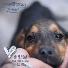 ¿Qué es para ti el amor perruno? 💛 / Mediterranean Natural / perros / dogs / dog love