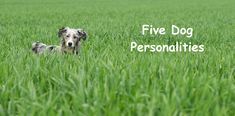 The Five Different Dog Personalities The Five, Different Dogs, Dog Care, Behavior, Your Dog, Dog Lovers, Personality, Best Friends, Pets