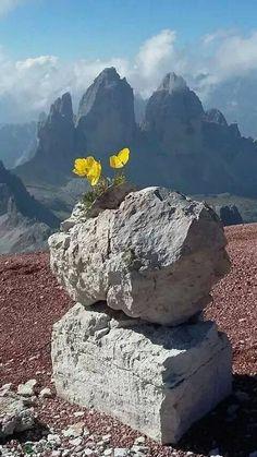 Foto Красивые Места, Дикие Цветы, Природные Чудеса, Картины С Изображением Природы, Удивительная Природа, Сад Подсолнечников, Цветы Пустыни, Выращивание Суккулентов, Красивые Цветы