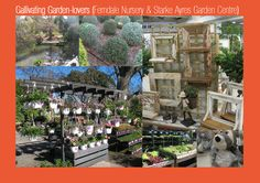 Photos of our outing to Ferndale Nursery and Starke Ayres Garden Centre.