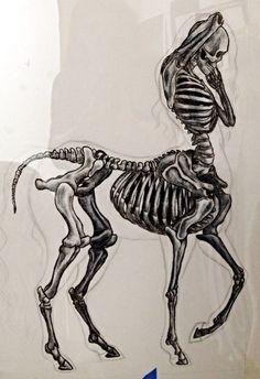 My art college skeleton Anatomy WIP centaur famous lime centaur anatomy centaur skeleton Anatomy Sketches, Anatomy Drawing, Anatomy Art, Art Drawings Sketches, Skeleton Drawings, Skeleton Art, Mythological Creatures, Mythical Creatures, Skeleton Anatomy