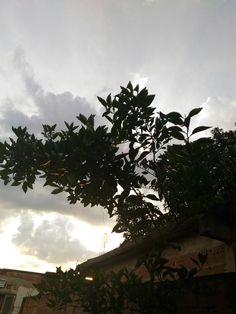 Nature, tree, paisagem, céu, nuvens, contraste