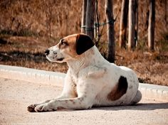 Σκύλος στο ελαιόρεμα