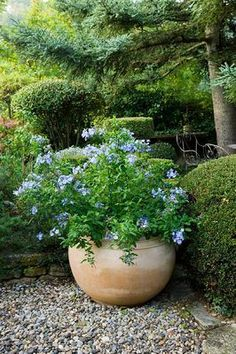 Shade Garden Ideas Starting a Shade Garden Shade Garden Ideas. The shade garden can be exploding with color and texture. No matter how much shade is in your landscape, the right flowers, plants, bu… Garden Urns, Garden Shrubs, Garden Planters, Shade Garden, Garden Benches, Container Plants, Container Gardening, English Cottage, Indoor Gardening Supplies