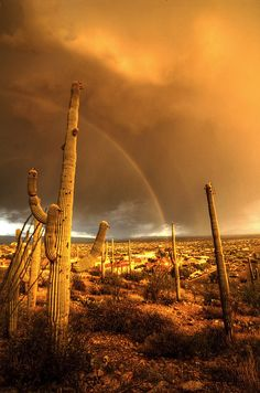 rainbow over Tuscon, AZ in storm clouds