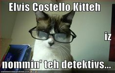 Elvis Costello Kitteh iz nommin' teh detektivs... - Cheezburger