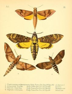 - Aid to the identification of insects / - Biodiversity Heritage Library Science Illustration, Nature Illustration, Botanical Illustration, Graphic Illustration, Ernst Haeckel, Natural History, Natural World, Scientific Drawing, Street Art