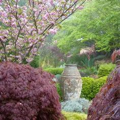 This colorful garden scene is to be enjoyed over 3 seasons of cheerful pleasure. It reveals the beauty of Acer palmatum 'Dissectum Atropurpureum' (Japanese Maple) whose deep purple spring foliage turns fiery orange-red in the fall. It is paired with the highly popular Japanese Flowering Cherry Tree, Prunus serrulata 'Kanzan'