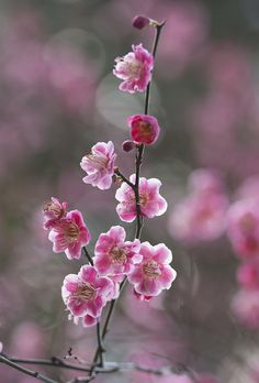 The Perfect World. Paper Flowers Craft, Flower Crafts, Flower Lockscreen, Cherry Blossom Flowers, Spring Blossom, Flower Aesthetic, Flowering Trees, Flower Wallpaper, Flower Photos