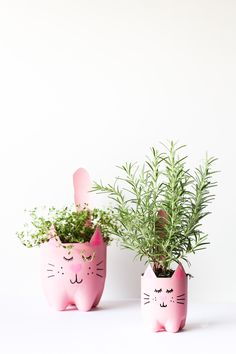 DIY Soda Bottle Kitty Cat Planters