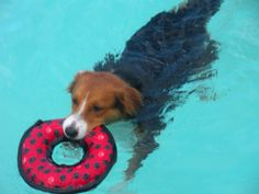 dog pool toy aqua red  Schaeff Dogs love their pool parties.