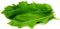 Horseradish Leaves- more uses susbstitude seaweed in sushi or dolmades, lettuce wraps, pesto or in any recipe with kale