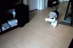 The newspaper dance! Press the GIF button.   #dogs #cutedogs