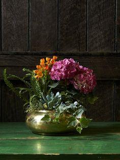 Lacecap Smooth Hydrangea, Hydrangea Care, Hydrangea Not Blooming, Hydrangea Flower, Shade Garden Plants, Garden Shrubs, House Plants, Plants Indoor, Flowers Garden