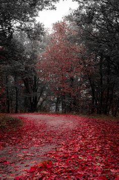 red carpet - null