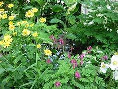 shade loving wildflowers | Shade loving plants | shade garden | Pinterest