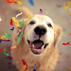 Take A Look At The Happiest Dogs To Help You Get Through Monday! - I Can Has Cheezburger?
