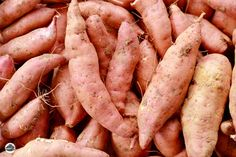 Harvesting sweet potatoes is labor intensive. Curing them after harvest is critical. Follow these tips to make the work easy and get the best flavor from your crop.