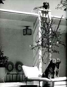 A HOUSE IS NOT A HOME |  BRUCE WEBER