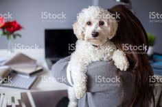 http://media.istockphoto.com/photos/woman-working-on-computer-with-dog-picture-id508374950