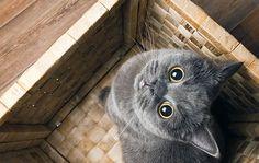 Mininos perciben a sus dueños como gatos gigantes