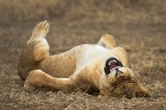 Best Entries So Far From the 2021 Comedy Wildlife Photography Awards | PetaPixel Funny Animal Photos, Funny Photos, Funny Animals, Cute Animals, Wild Animals, Funny Images, Photography Competitions, Photography Contests, Photography Awards