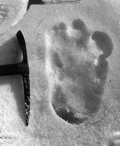 Experts in Russia '95 percent sure' Bigfoot exists