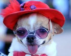 Red Hat Dog