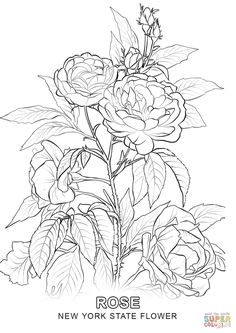 Rose Coloring Pages Printable Sketch Page