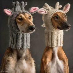 Easy DOG SWEATER Free Crochet Pattern - Free Crochet