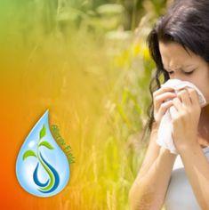Allergyfield - Natural Allergy Relief