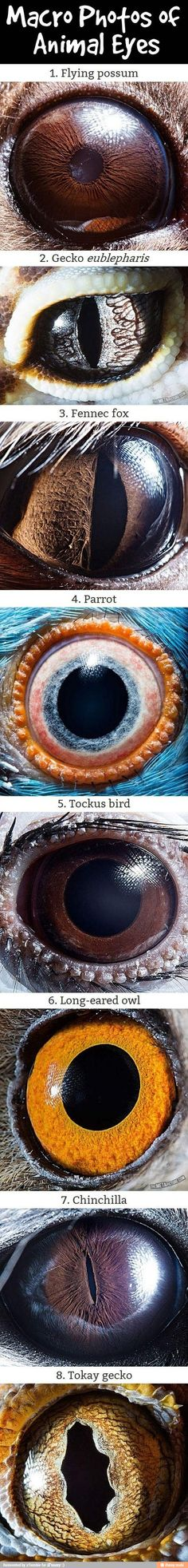Macro photos of animal eyes so weird