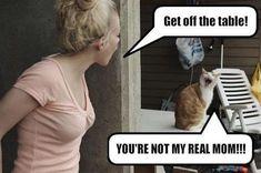 30 Funny animal captions - part 10 (30 pics)   Amazing Creatures