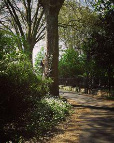 #foretdelarobertsau #Robertsau #jaimemaville #instastrasbourg #instalsace #instanature
