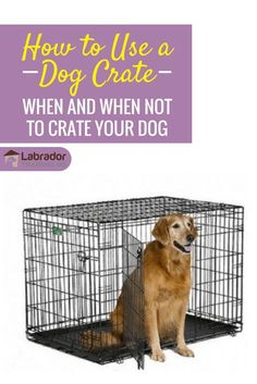 How to use a dog crate, when you SHOULD and when you certainly SHOULD NOT! learn to use it correctly and humanely, with your dogs best interests in mind.