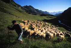 Transhumance dans les Pyrenees Sheep And Lamb, Yorkshire Dales, World Cultures, Go Outside, Provence, Farmer, To Go, Around The Worlds, Mountains