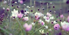- makes me want to run through a field of wild flowers..
