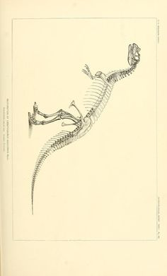The dinosaurs of North America / - Biodiversity Heritage Library
