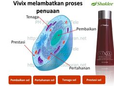 PM / Whatsapp / Tele 017-4666007