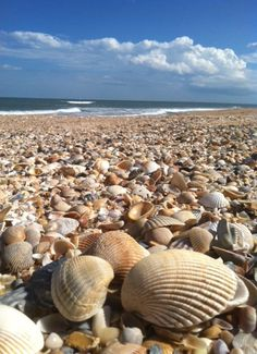 St. Augustine Beach, wow could do some serious shell collecting here!