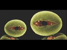 Jonathan Drori: Every pollen grain has a story (TED) #Pollen #Jonathan_Drori #Science #TED