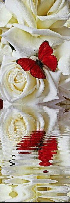 Branco magnifico